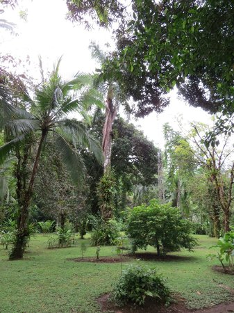 Tortuga Lodge & Gardens: Gardens