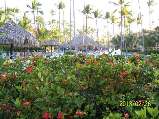 Majestic Elegance Punta Cana: 4