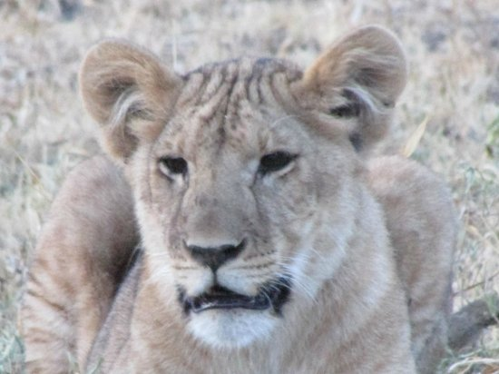Manyara Ranch Conservancy :                   One of our friends close by!