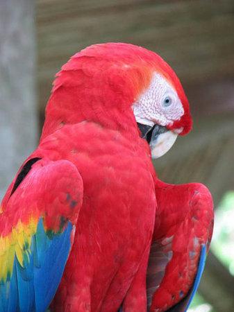 Casa Bambu Resort: Scarlet Macaw