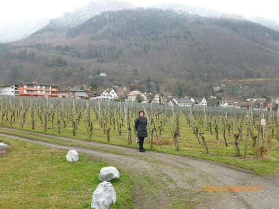 Hofkellerei (Wine Cellars) of the Prince of Liechtenstein: Vineyard