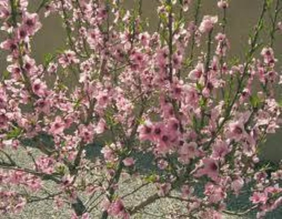 Ramada Decatur: peach on the back hill