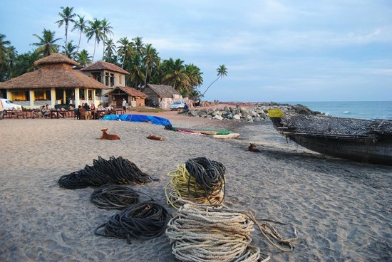 Palm Tree Heritage: Hotel from the beach with fishing boat and friendly dogs