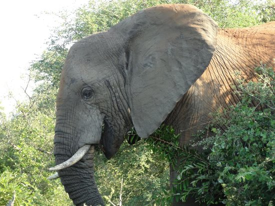 Naledi Bushcamp and Enkoveni Camp: More close encounters!