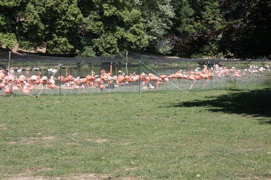Rambouillet, Francia:                   Reserve zoologique de Sauvage