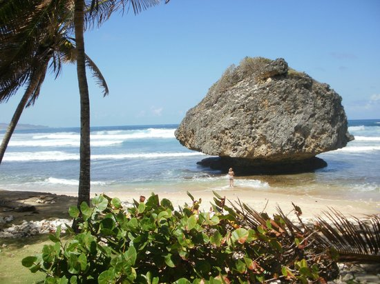 Bathsheba Beach : Bathsheba main beach