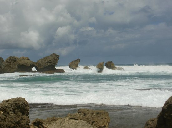 Bathsheba Beach : Bathsheba rock formation