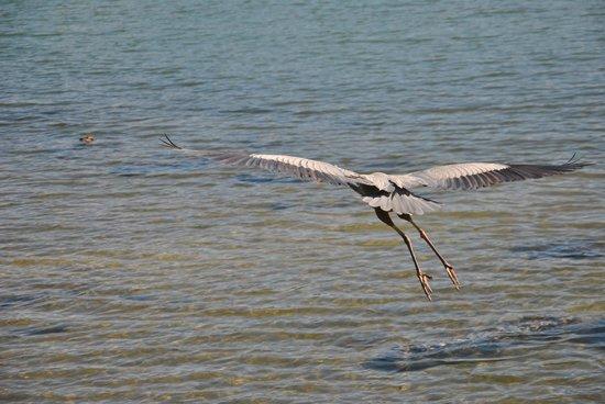 Clam Bayou Nature Park: Naturbeobachtungen