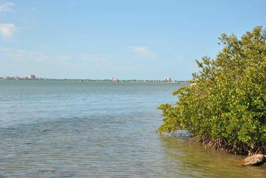 Clam Bayou Nature Park: Aussicht nach St. Petersburg