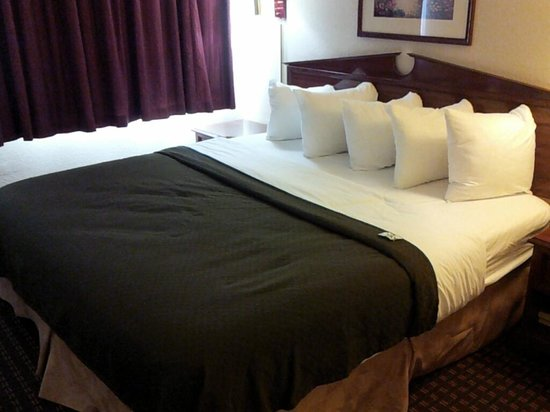 BEST WESTERN Edmond Inn & Suites: This was such a comfortable bed with plenty of pillows!