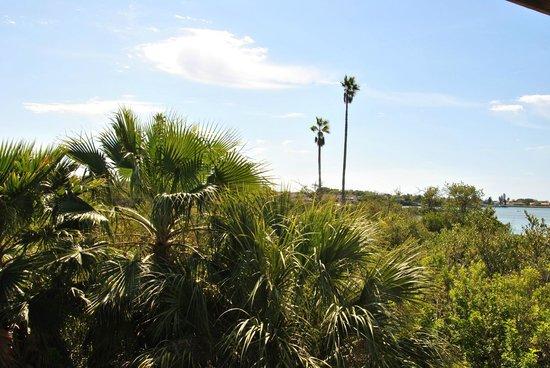 Clam Bayou Nature Park : Aussicht vom höchsten Punkt aus