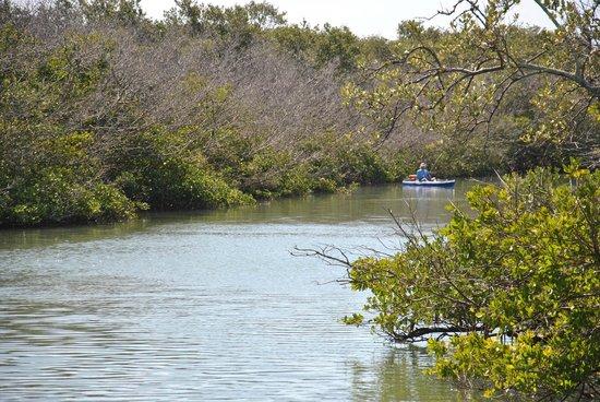 Clam Bayou Nature Park : Eine der vielen Buchten