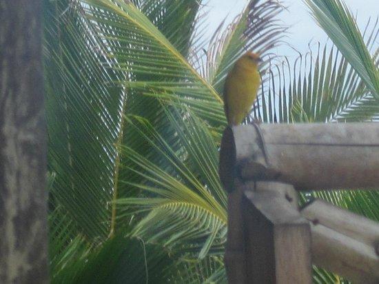 Mamaqocha Ecolodge: Este tipo de aves de despiertan alas 7am