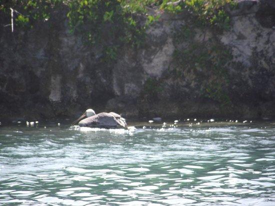 Heaven at the Hard Rock Hotel Riviera Maya: Le pelican