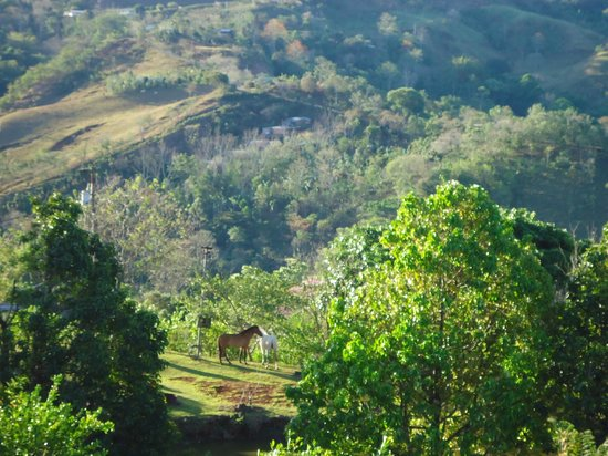 Las Alturas de Puriscal : overlooking pastures