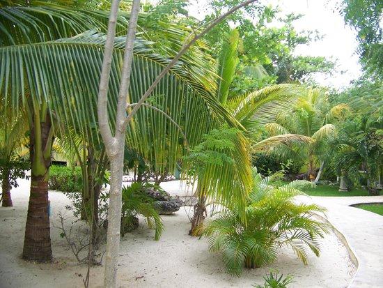 Petit Lafitte: Grounds near the bungalows