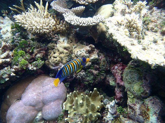 Robinson Club Maldives: Fish