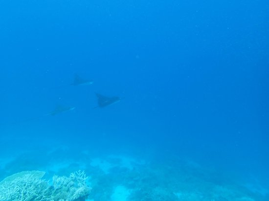 Robinson Club Maldives: Stingrays