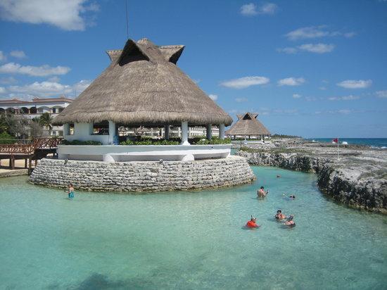 Heaven en Hard Rock Hotel Riviera Maya: Lagoon - saw a cool eel and some urchins!
