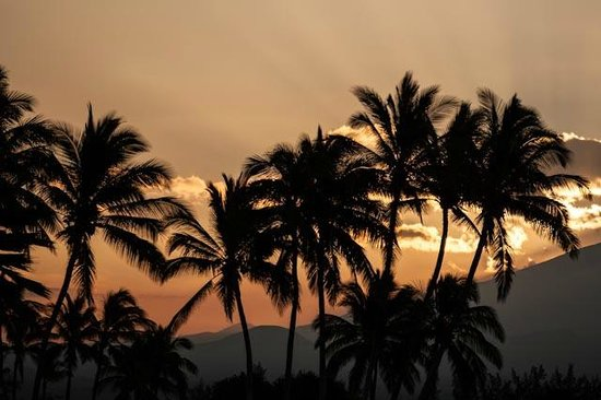 Kohala Suites by Hilton Grand Vacations: Sunrise with palm trees