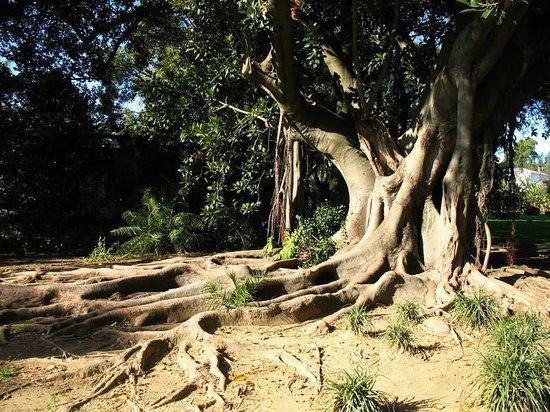 Лиссабонский ботанический сад: наследие мореплавателей - Ароидные ...   412x550