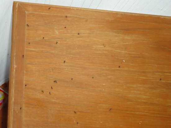 Suansawan Resort Chiang Mai: floor under airconditioner covered with ants
