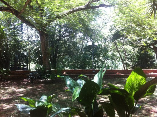 Guest House Puerto Iguazu:                                     View of the garden
