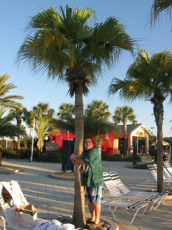 Holiday Inn Club Vacations At Orange Lake Resort: My brother hugging a palm tree in the West Village pool area.