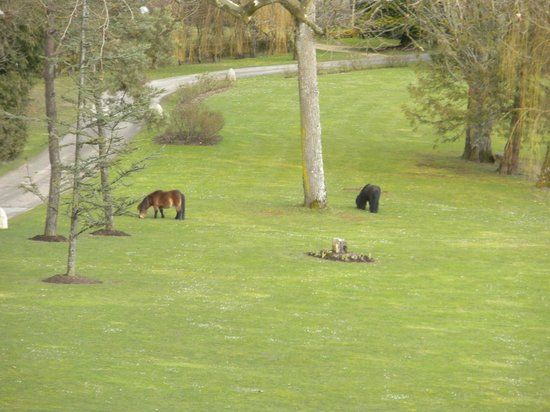 Abbaye de la Bussiere: garden with the ponies from our room