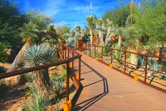 Desert Botanical Garden: The Berlin Agave Yucca Forest .