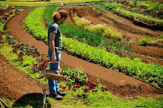 The Garden Tour Picture Of O O Farm Kula Tripadvisor