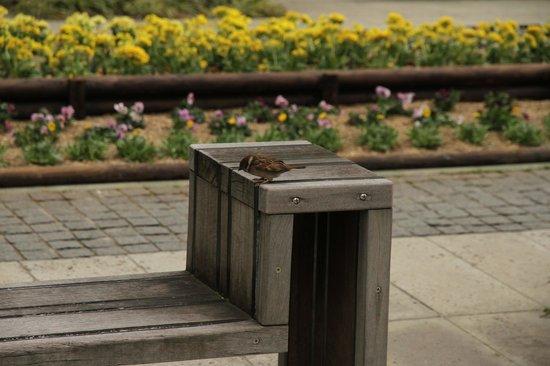 Yokohama Museum of Art:                   雀