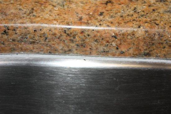 Tuscana Resort Orlando by Aston:                   sugar ant on kitchen sink.