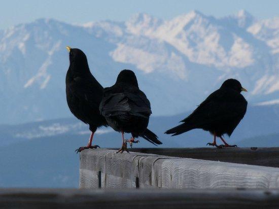 Hotel Salegg: In vogelvlucht