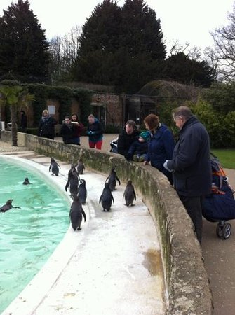 Cotswold Wildlife Park and Gardens: Happy Feet!