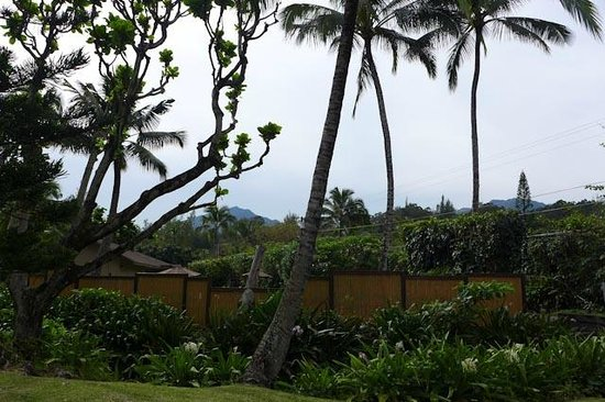 Hanalei Colony Resort: Resort view