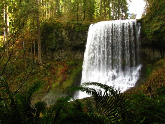 Silver Falls State Park: Another beautiful fall along the loop