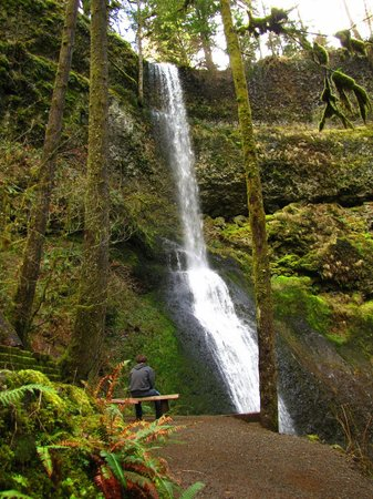 Silver Falls State Park: Falls along the loop