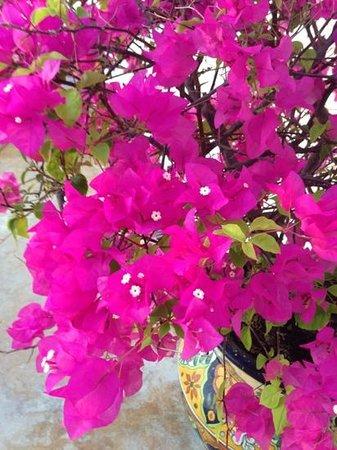 Eva`s Brickhouse: flora