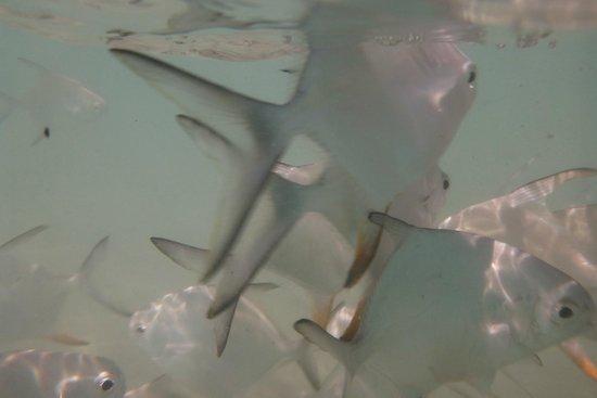 El Dorado Sensimar Riviera Maya: fishes at the beach
