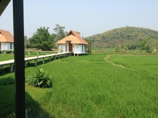 Manee Dheva Resort & Spa: vue incroyable depuis notre bungalow au milieu de la rizière