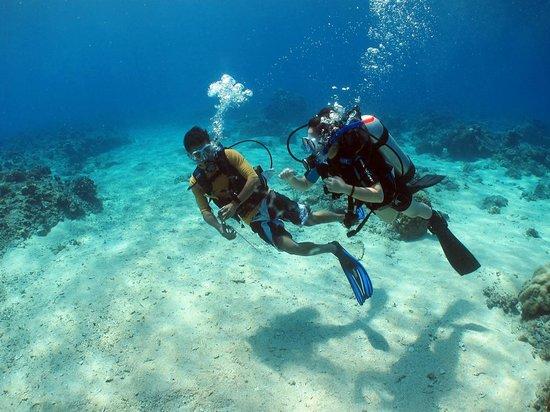 Bee Diver