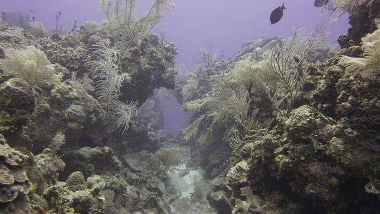 Blackbird Caye Resort: coral reefs