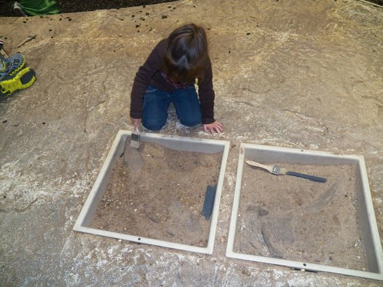 Saint Louis Science Center: The dig site. They made it very realistic, with bones, fossils and teeth to find.