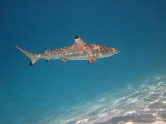 Fare Vaihere snorkeling tour requin pointes noires