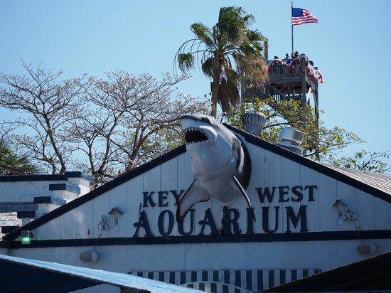 As Seen From Dock Picture Of Key West Aquarium Key West Tripadvisor