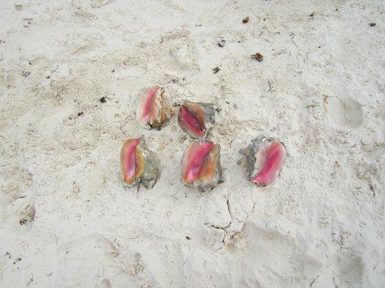 Viva Wyndham Fortuna Beach: sur la plage