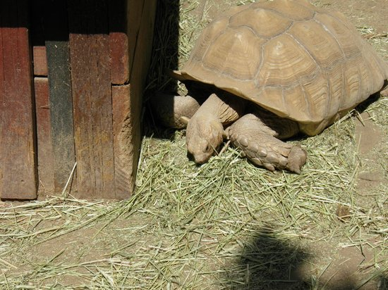 Wildlife Learning Center: The turtle