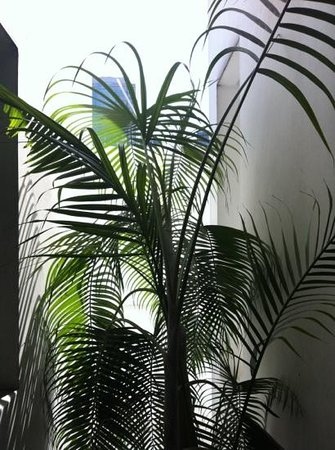 Baan Silom Soi 3:                   Nice plant at outer corridor of apartment lift lobby.