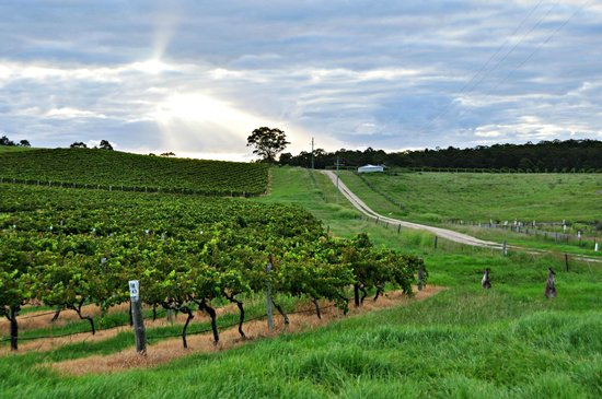 Willow Tree Estate: Neighbouring Vineyard